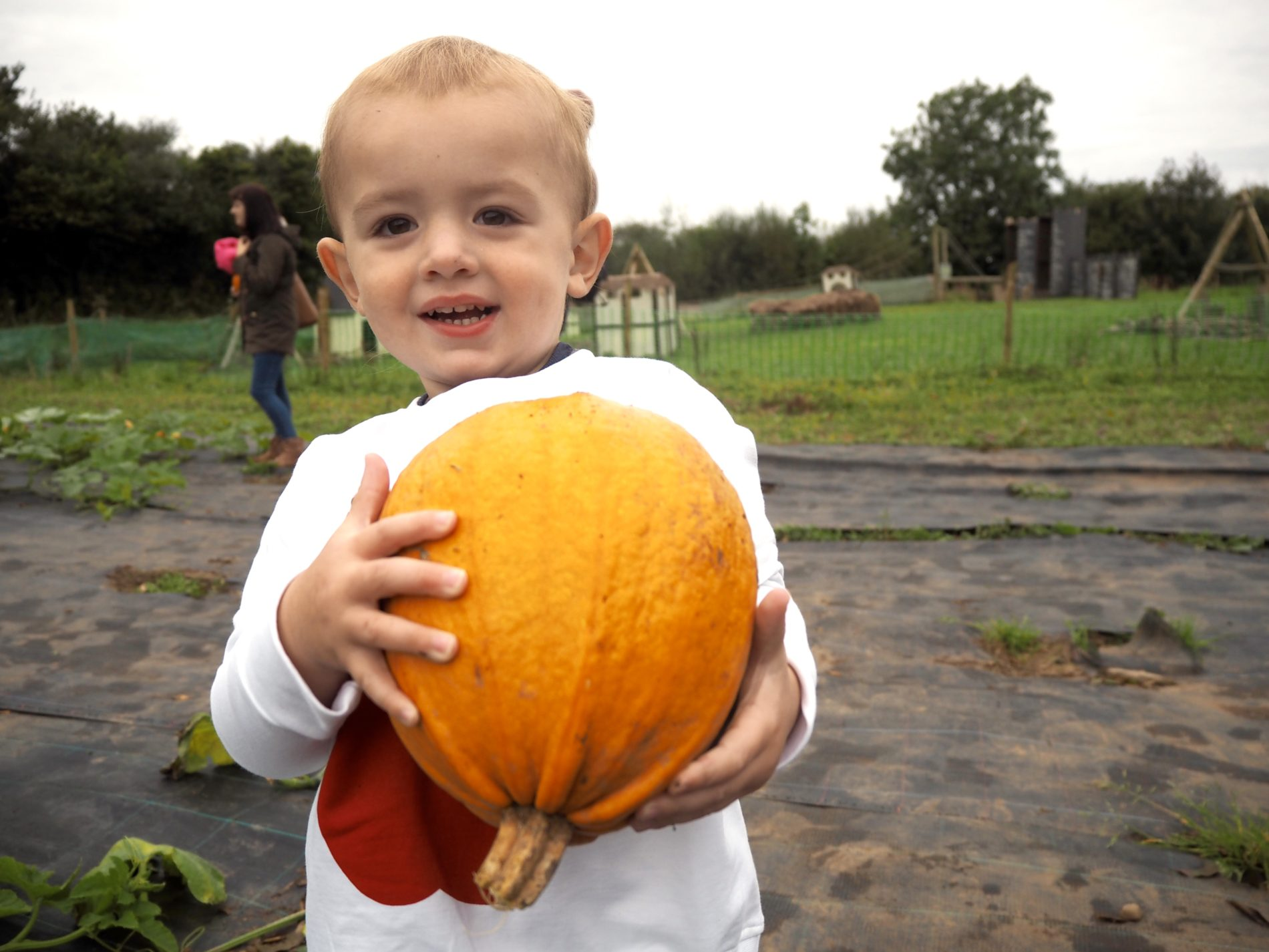 Pumpkin picking at Hendrewennol